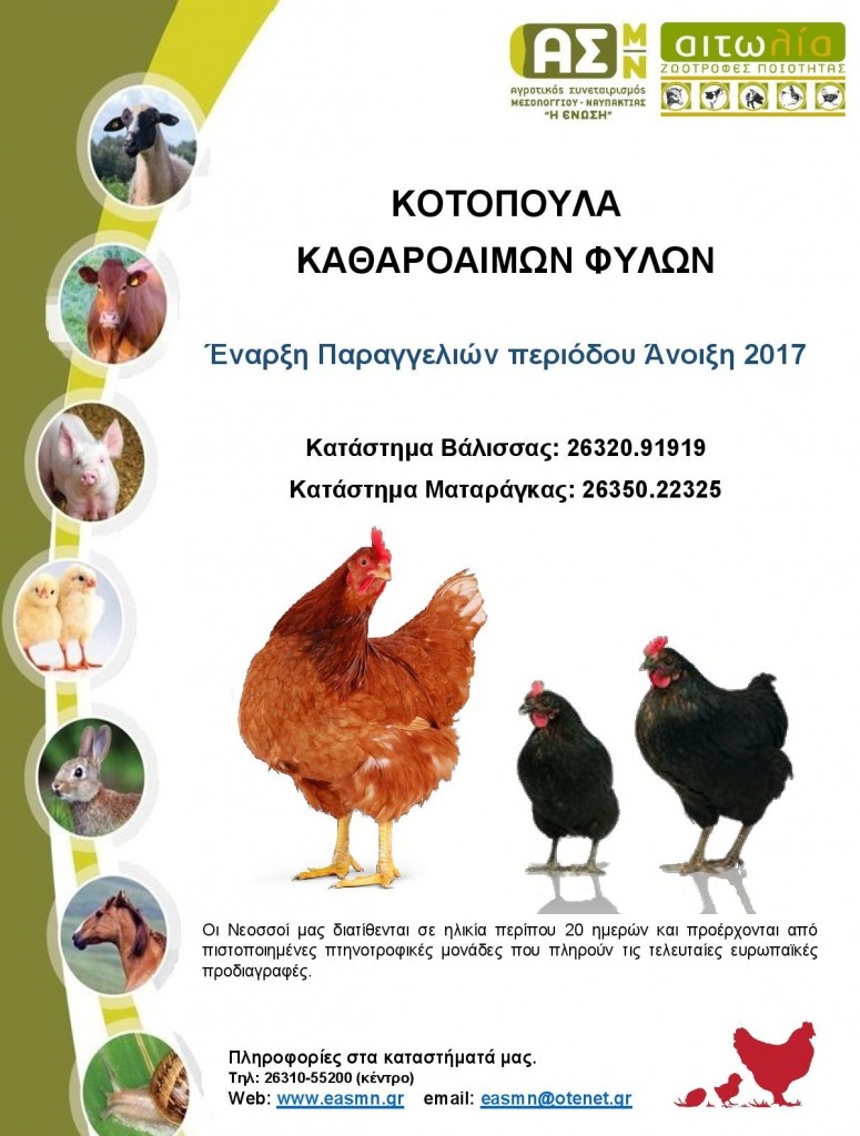 kotopoula 2017