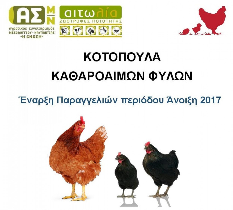 Έναρξη Παραγγελιών Νεοσσών Κοτόπουλων