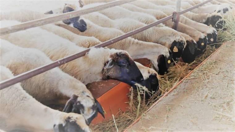 Αιγοπροβατοτροφία – Διατροφή